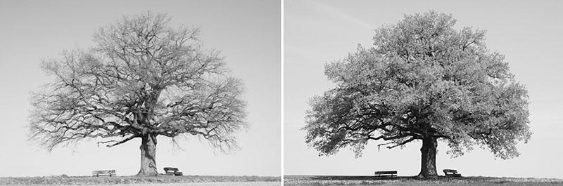 κάλυψη της τριχόπτωσης δέντρο